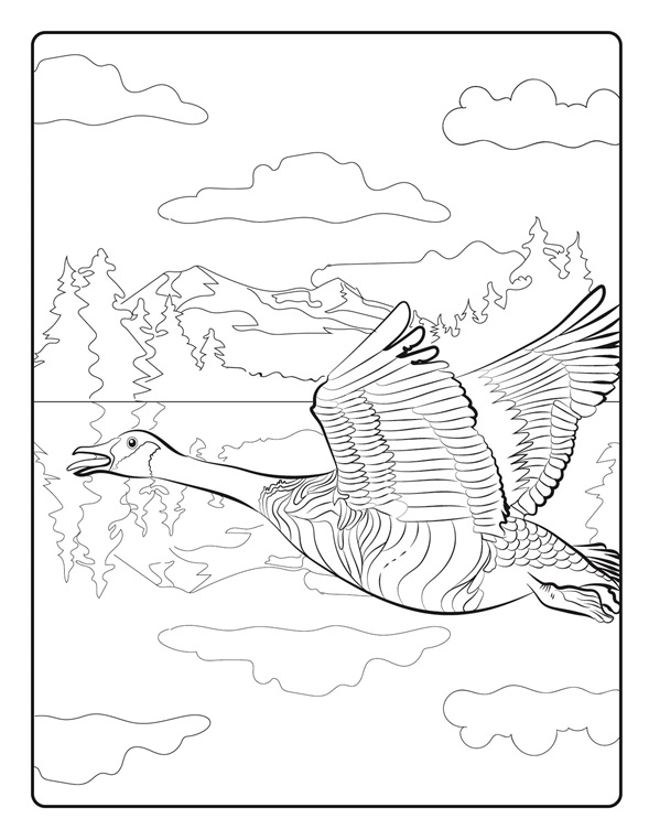 canada goose colouring pages sketch coloring page